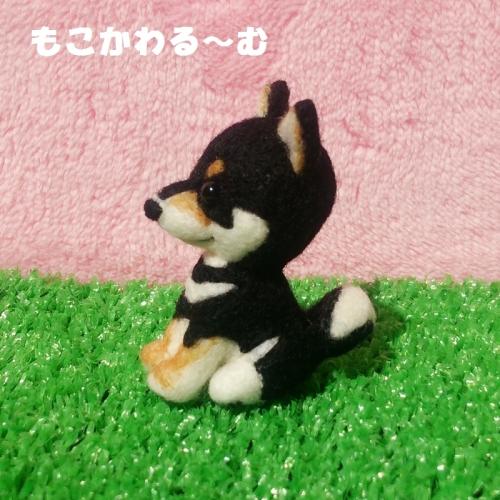 ミニ黒柴2