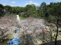 広島県立美術館 桜