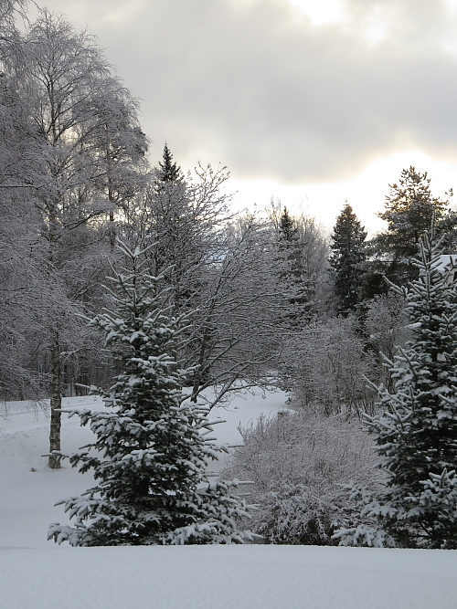 フィンランド 2月雪景色