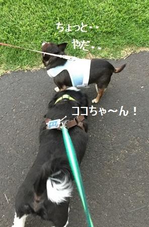 IMG_8329moji.jpg