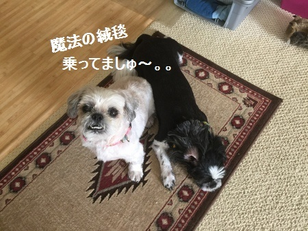 IMG_8533moji.jpg