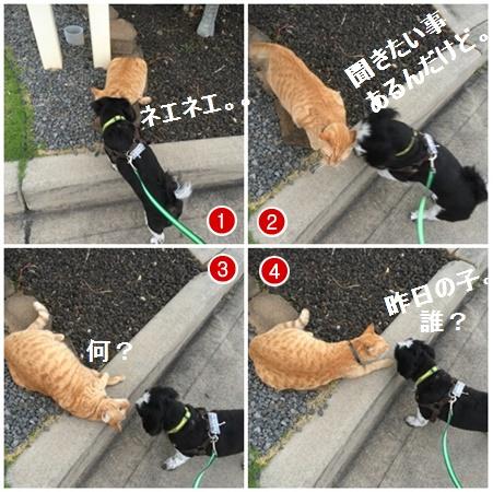 page8304x4moji.jpg