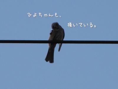 th_IMG_2112.jpg