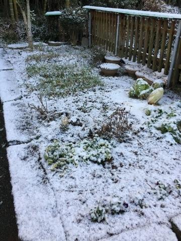 2017.2.11雪