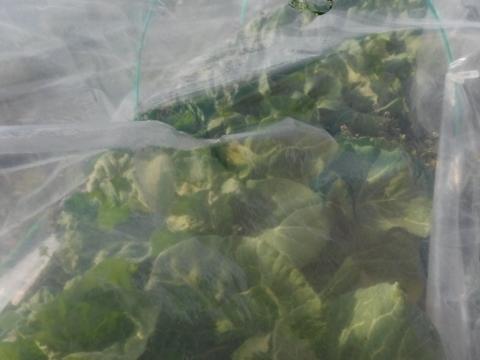 2017.2.12野菜
