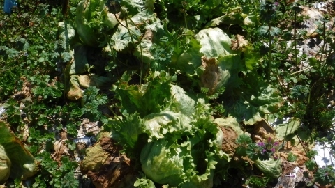 2017.3.4野菜