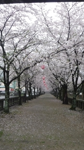 2017.4.9桜3