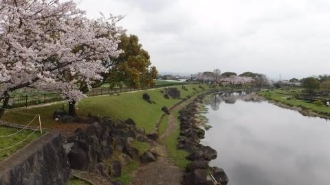 2017.4.9桜4