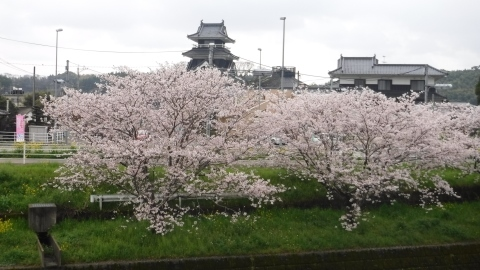 2017.4.9桜8