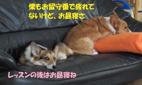 05170417IMG_2891.jpg