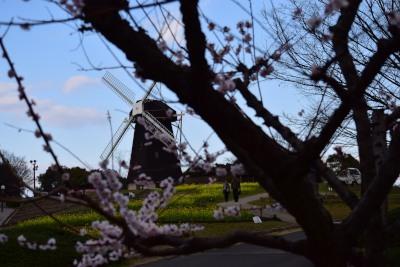 風車DSC_0323