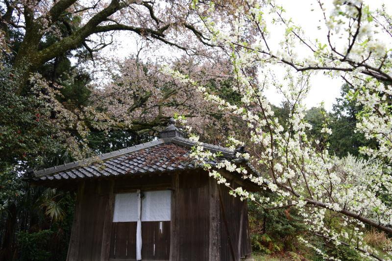 DSC_1138_00004黒川