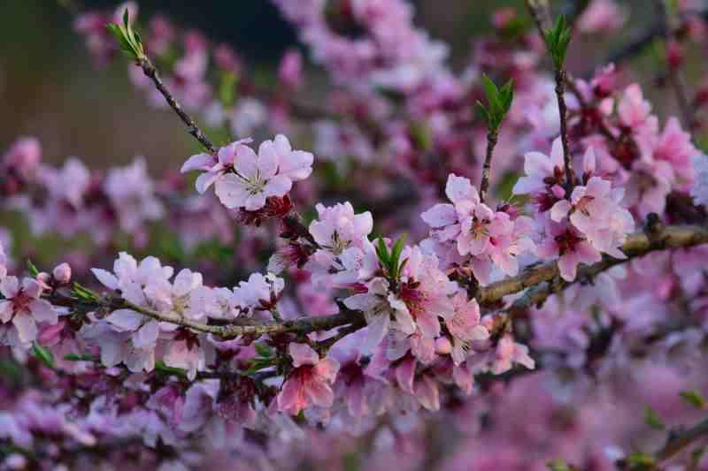 DSC_1511_00001菜の花イソヒヨドリ