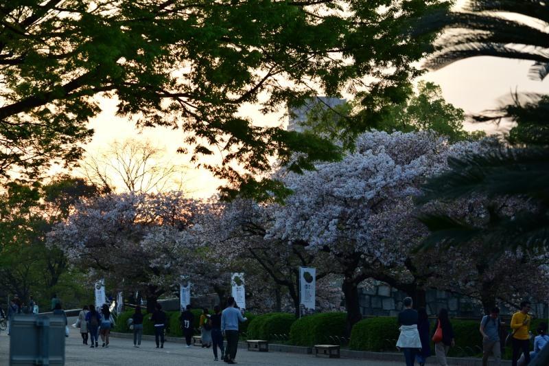 桜並木DSC_0252