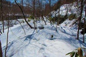 鉄路盤切崩箇所 木が多い