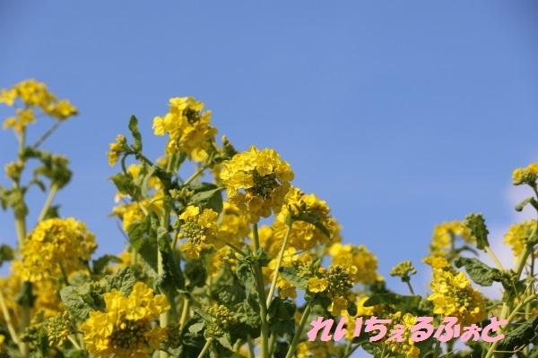 DPP_12752.jpg