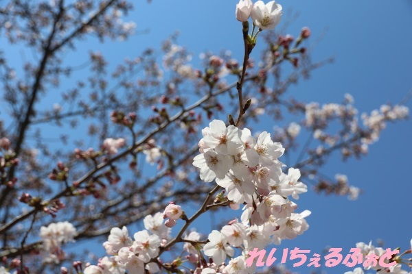 DPP_12835.jpg