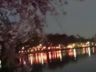 洗足池夜桜1