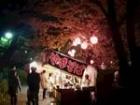 洗足池夜桜2
