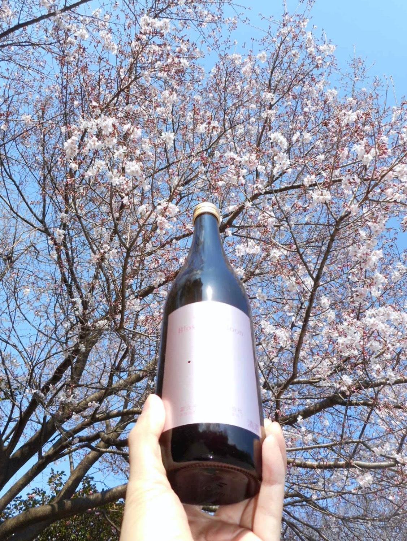nabeshima_blossom28by3.jpg