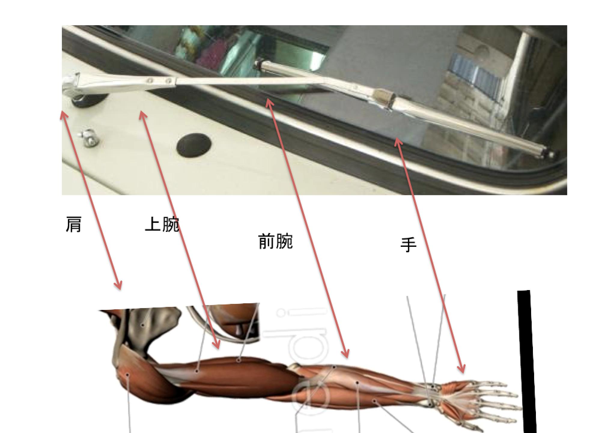 ワイパーと上肢の関係
