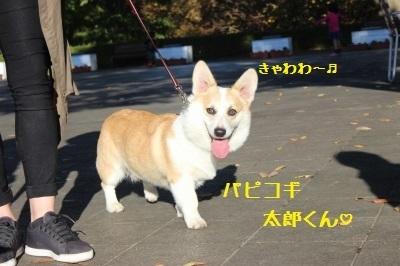 11IMG_6816.jpg