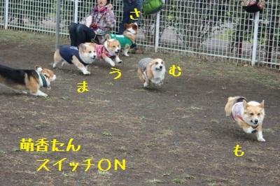 10IMG_6550 (1)