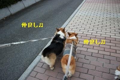 20IMG_6498.jpg