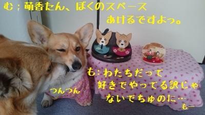 2DSC_2862.jpg