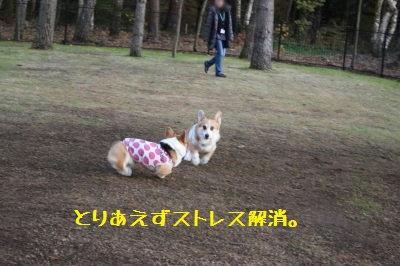 4_IMG_7017.jpg