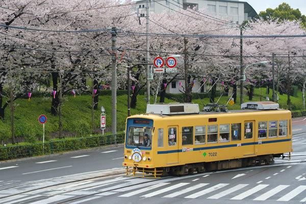 170409asukayama7022-2.jpg