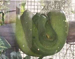 bangkok_snake_farm_image07.jpg