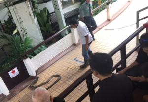 bangkok_snake_farm_image13.jpg