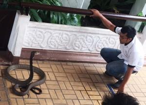 bangkok_snake_farm_image14.jpg