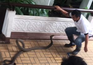 bangkok_snake_farm_image15.jpg