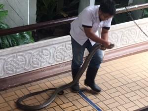 bangkok_snake_farm_image16.jpg