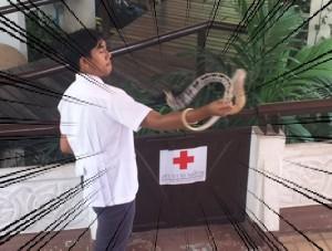 bangkok_snake_farm_image19.jpg