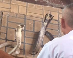 bangkok_snake_farm_image23.jpg