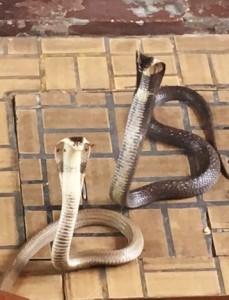 bangkok_snake_farm_image24.jpg