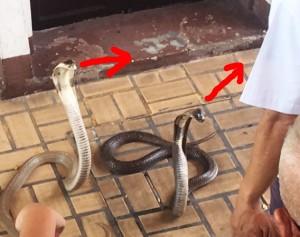 bangkok_snake_farm_image26.jpg