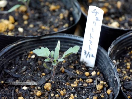 tomato170423-1