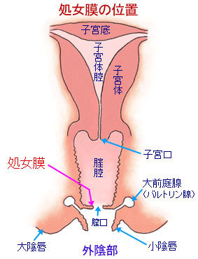 hymen_position.jpg