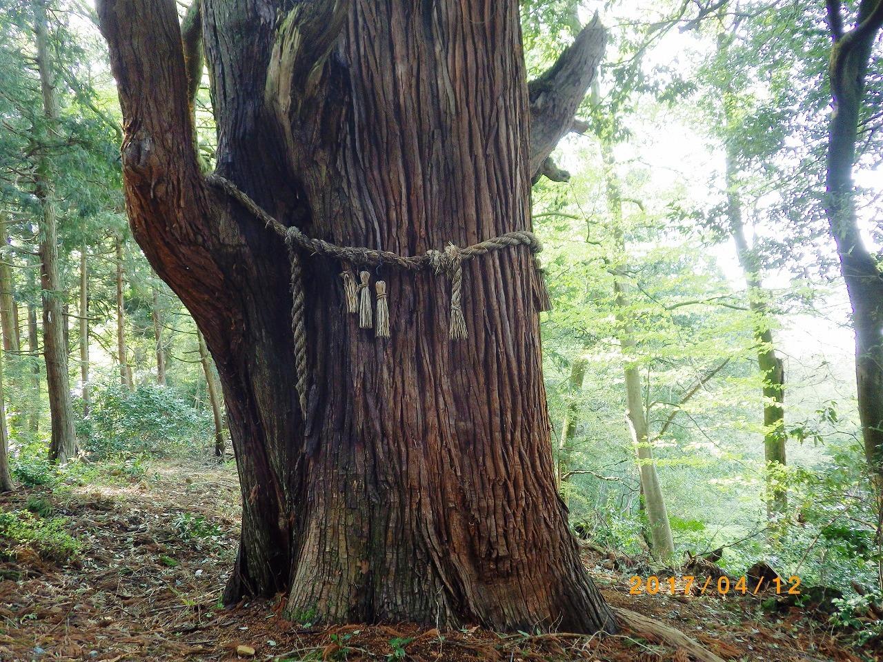1533弐の杉2