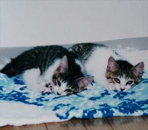 21年前のアンとシャーリー_R