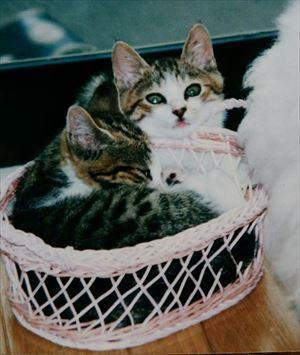 21年前のアンとシャーリー02_R