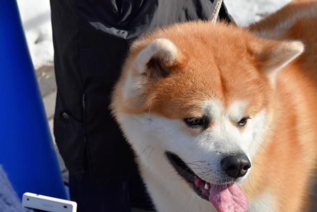 秋田犬2017010000000000