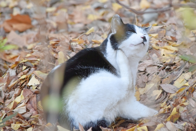寝ふてふて猫201612300000005