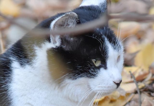 寝ふてふて猫201612300000007