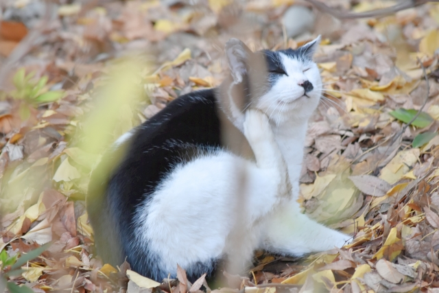 寝ふてふて猫201612300000006
