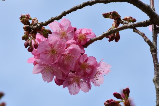 桜2017040200000004